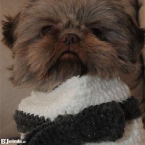 bandana hond